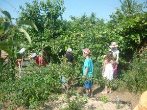 Education à l'environnement (3)